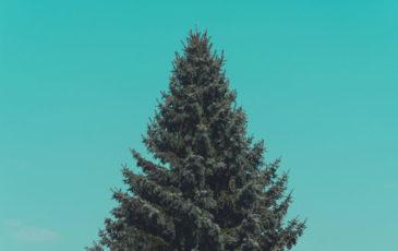 Christmas Marketing - Why talk christmas marketing in september